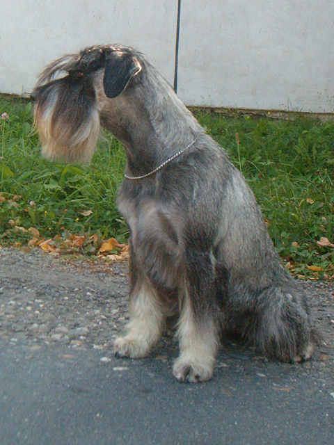 Slovakia Dog Show Results